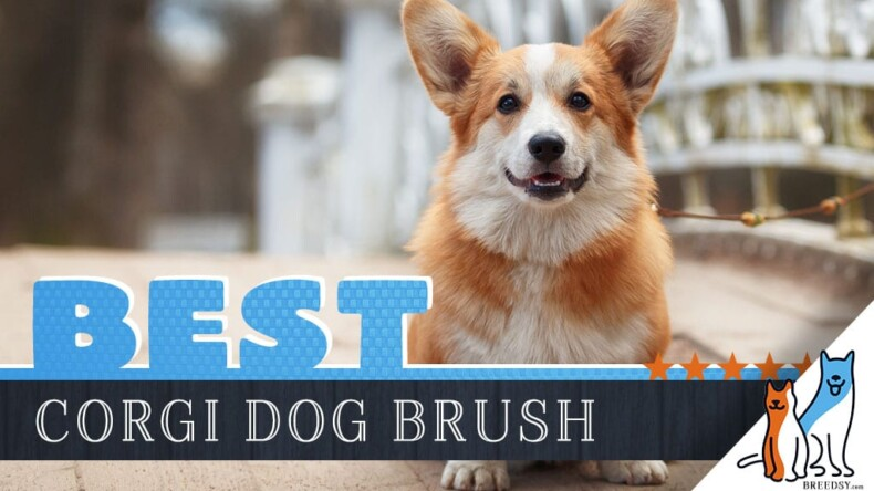 Tips and tricks:To You Corgi Puppy's Grooming
